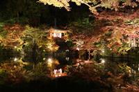京都・醍醐寺で秋季夜間拝観 ライトアップに紅葉浮かび上がる