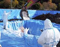 イノシシ接触、可能性低い 豚コレラ感染で岐阜市