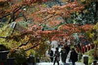 【動画】台風21号で倒木放置された山も紅葉 鞍馬寺
