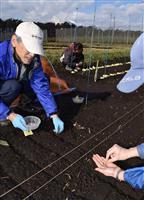 イネの初冬直播き栽培実験がスタート
