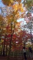 鮮やか紅葉ピーク 滑川・武蔵丘陵森林公園