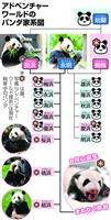 華麗なるパンダ一族 繁殖16頭 アドベンチャーワールド