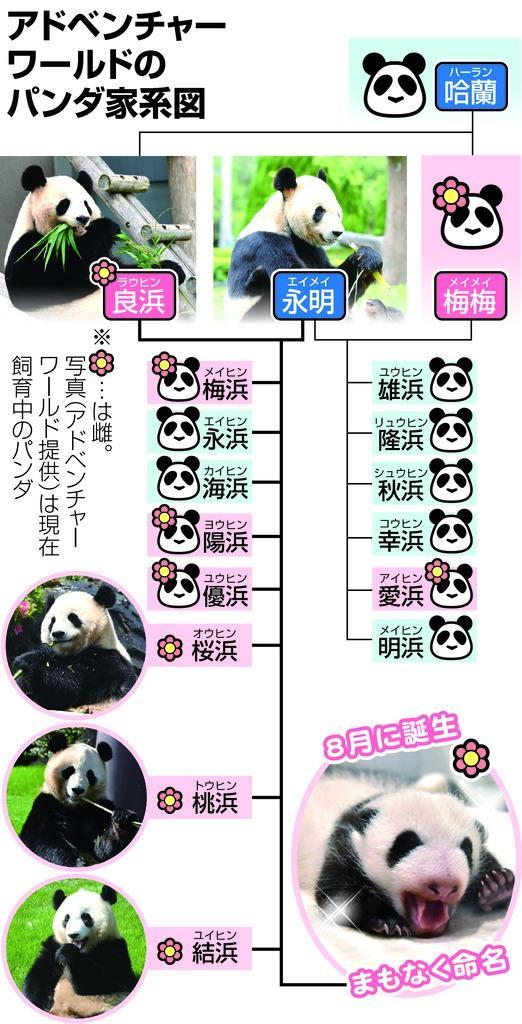華麗なるパンダ一族 繁殖16頭 アドベンチャーワールド 産経ニュース