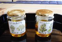 大神神社に園児が作った菜種油奉納、灯明に