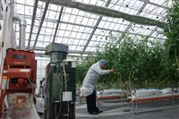 佐賀・基山町と西鉄、未来の農業へ最新技術導入 ICT活用しトマト栽培