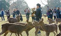 【動画あり】初冬の風物詩 奈良の「鹿寄せ」始まる