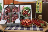 イチゴ新品種「にこにこベリー」、プレデビュー 宮城