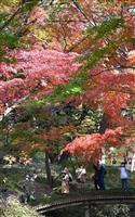12月なのに各地で夏日 都内では紅葉見頃
