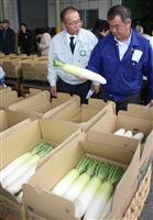 布引だいこん出荷ピーク 和歌山市のJA、「目揃え会」で規格確認