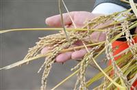 ゲノム編集食品、届け出制に…安全配慮、ルール作りへ 厚労省