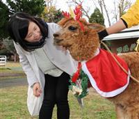 アルパカはクリスマス衣装、カピバラはのんびり温泉 米子の観光牧場