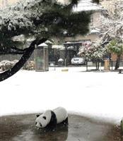 新潟市初雪、平年より14日遅れ