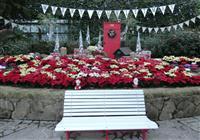 「白いベンチ」で幸せに ポインセチア使いインスタ映え 淡路イングランドの丘大温室
