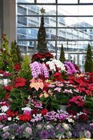 花で彩るクリスマス 本庄