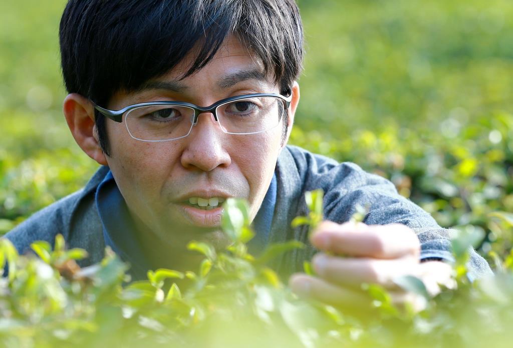 【お茶で日本を温かく(4)】真冬にもお茶作り 健一自然農園代…