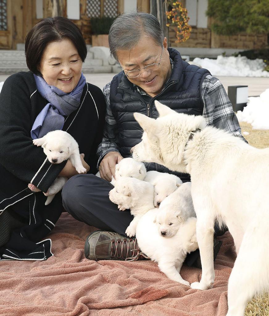 【コリア実況中継!】岐路に立つ韓国犬食文化 「歴史の裏道に消…