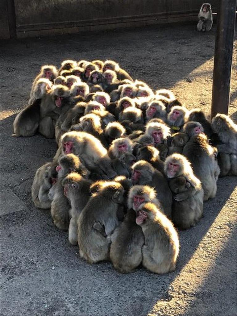 「サル団子」ほっかほか 香川・小豆島