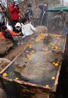 カピバラ「いい湯だな」 栃木・那須どうぶつ王国