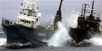 日本、国際捕鯨委員会から脱退へ