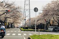 松戸の女児殺害事件公判 リンさんが見たかった桜