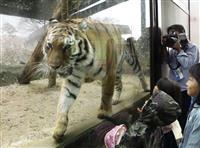 熊本地震で被災の動植物園に歓声戻る 全面再開で入園者倍増