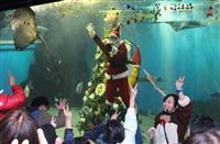 水中サンタとジャンケン 越前松島水族館でイベント 福井