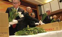 スイセンを常陸宮家に献上 福井・越廻公民館で300本を選花し箱詰め