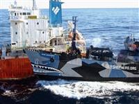 シー・シェパードが「勝利」宣言 日本の南極海撤退で