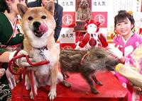 【動画】イヌからイノシシへ 通天閣でえとの引き継ぎ式