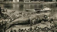【明治150年】第5部 地方(2)捕鯨文化守る太地 移民先の迫害が生んだ「寛容」