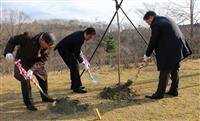 富谷市にサトウカエデ寄贈 15年後にはメープルシロップ収穫も