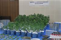 自宅で大麻栽培容疑の43歳逮捕 横須賀