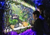 テーマは夜のジャングル 県なかがわ水遊園で冬の企画展