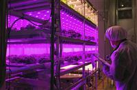 セブンが野菜専用工場 来月、相模原で稼働