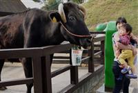 豪雨の危機から生還の長寿牛が人気 岡山の「元気くん」