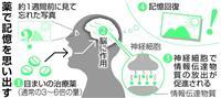 忘れた記憶を薬で回復 東大など世界初、認知症治療目指す