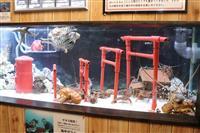 「エッビ~ ニューイヤー」 和歌山の水族館でエビたちの初詣