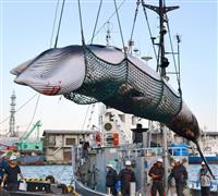 外務省、捕鯨めぐり日本批判の米紙社説に反論掲載