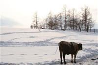 【日本再発見 たびを楽しむ】のびのび育てた牛たちの乳製品味わって~十勝しんむら牧場(北…
