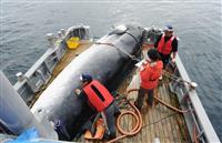鯨類保護に「挑戦するな」 IWC脱退でEU声明