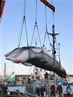 【政界徒然草】IWC脱退 自民捕鯨推進派議員の迅速な対応、国際批判を抑制