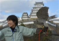 鷹匠文化復活へ本格化 姫路市立動物園にオオタカ仲間入り