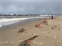 新潟県胎内市の沖合に木造船の一部が漂着