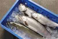 びわ湖のめぐみ味わう 滋賀県がおもてなし食堂フェア