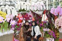 洋ラン200鉢華やか とちぎ花センターで企画展