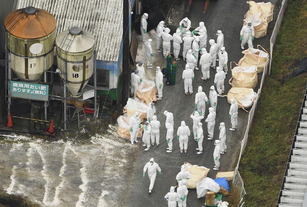 豚コレラの感染が確認された愛知県豊田市の養豚場では防護服を着た作業員が豚の殺処分を行った=6日午後1時22分(共同通信社ヘリから)