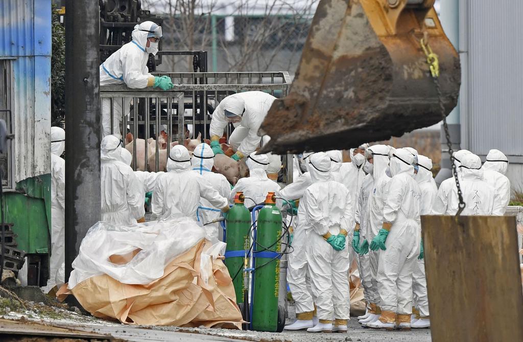 豚コレラの感染が確認された愛知県豊田市の養豚場で進む防疫作業=6日午後1時54分