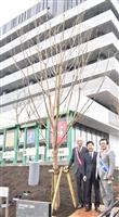 水戸市新庁舎に桜寄贈 さくらロータリークラブ