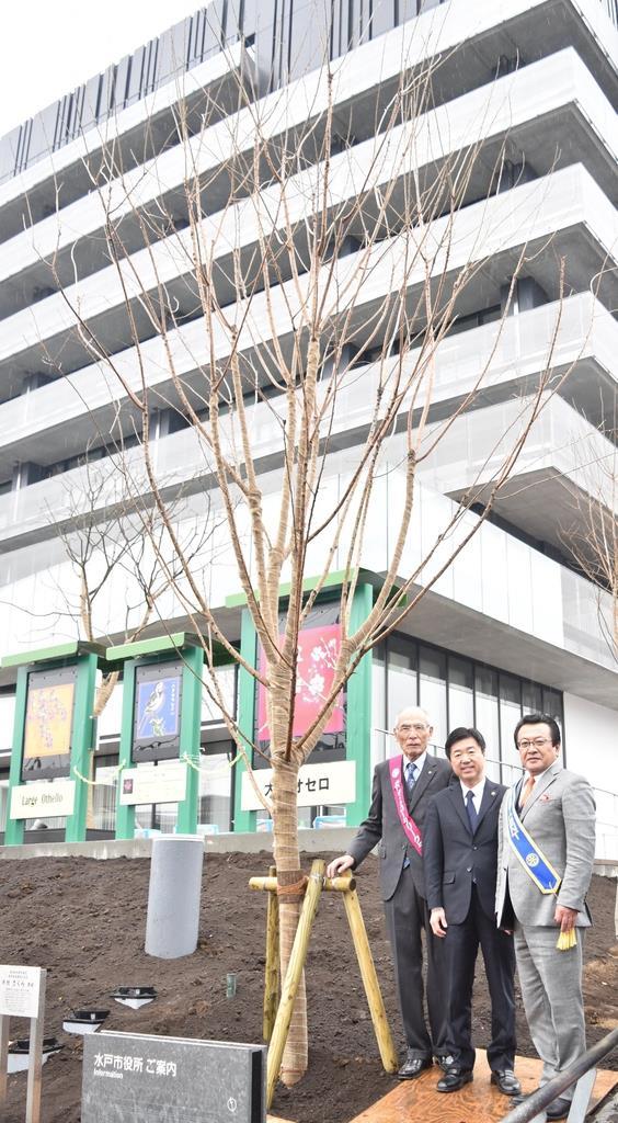 寄贈された桜とともに記念撮影する水戸市の高橋靖市長(中央)ら=6日午後、同市中央