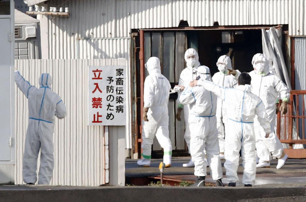 豚コレラの感染が確認された滋賀県近江八幡市の養豚場周辺に集まった防護服姿の作業員=6日午後1時47分